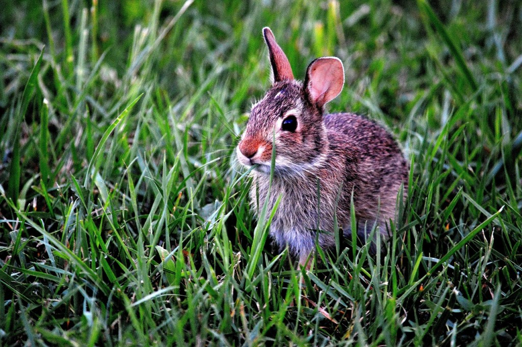 PETA: Air Force Academy program is cruel to rabbits