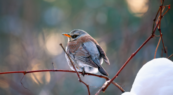 Save the date: The Great Backyard Bird Count